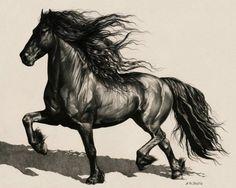 Картинки по запросу friesian horse