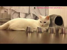 #Funny #Cat Video Darth #Kitteh The #LOLCAT aka Anakin SCATwalker. The Funniest Cat Video #icanhascheezburger #lol