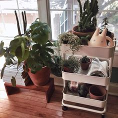 Ikea Raskog cart used for plants