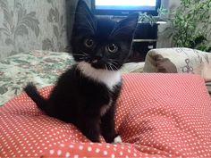 Cutest of the cute.