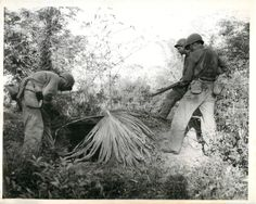 1945- U.S. soldiers advancing on camouflaged Japanese pillbox that faced road to Luzon village of Manac.