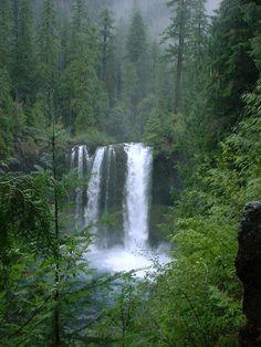 Azalea (Town) Oregon