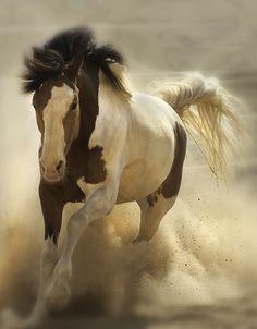 .love horse baby!!