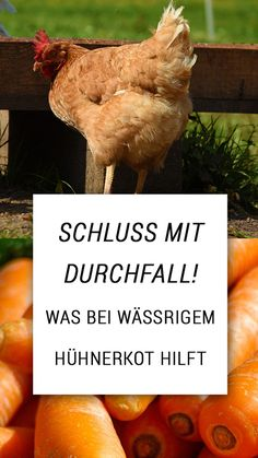 Sprouts, Most Beautiful Pictures, Life Hacks, Backyard, Chicken, Garden, Quotes Inspirational, Super, Life Quotes