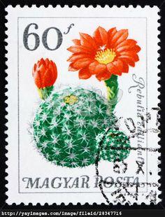 HUNGARY - CIRCA 1965: a stamp printed in the Hungary shows Flower, Rebutia Calliantha, Cactus, circa 1965