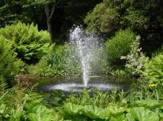 How to Make the Most of Your Pond    What are the best water features? Andy McIndoe talks fountains, rills, ponds, pond pumps, waterfalls and how to keep your water feature looking at its best