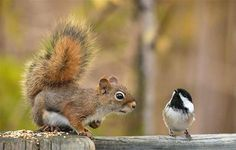 magicalnaturetour: Squirrel with bird.by AlexanderBB