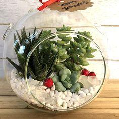 Succulent Terrarium Kit Hanging Planter-Christmas Home