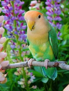 beautiful birds, butterflies and flowers - Comunidad - Google+