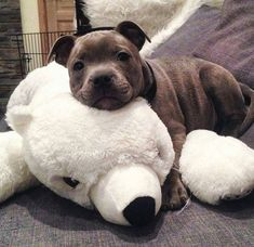 Soon enough, he'll be bigger than his polar bear...
