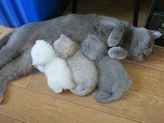得意げな親猫と子猫の画像:ハムスター速報
