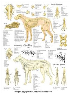 Dog Anatomy Laminated Poster Set