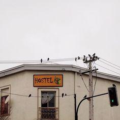 Notas musicales por palomas ;)