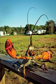 Your lunch awaits at Nunan's Lobster Hut in Kennebunkport