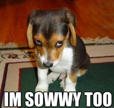 Im Sowwy too  - Im Sowwy too   im sorry