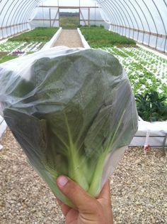 SAND CREEK FARM - Aquaponic Facility / Organic Tilapia Feed