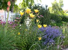 Colorado xeriscape plants.  This is the combo of flowers we're putting in our front yard with the dry creek bed!!