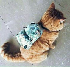 Moda for cats