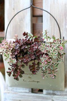 鉢植え : 小さな手作りガーデン