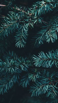Enjoy 35 Christmas iPhone Wallpapers by Preppy Wallpaper