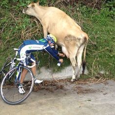 Cyclist milking cow, Next time you're thirsty