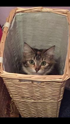 2342 best lost and found cats uk images found cat lost february rh pinterest com