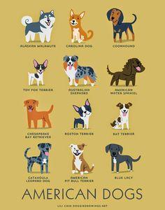 American dogs (c) Lili Chin @ doggiedrawings.net