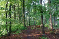 Wanderwege in München - Bei einem entspannten Urlaub in München gibt es viele Gelegenheiten für lange entspannende Spaziergänge. Der Forstenrieder Wildschweinpark befindet sich in unmittelbarer Nähe des Waldgasthof Buchenhain - ein idyllisches Hotel in München Süd