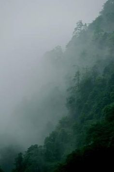 Photographic Print: Misty Green Forest of Emei Shan by Tyrone Turner : Dark Green Aesthetic, Rainbow Aesthetic, Nature Aesthetic, Aesthetic Collage, Aesthetic Vintage, Aesthetic Photo, Photo Wall Collage, Picture Wall, Rainbow Photo