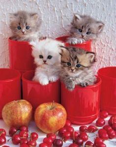 Adorable Cute Pen-Pot Kittens