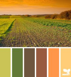 Harvest Hues - http://design-seeds.com/index.php/home/entry/harvest-hues1