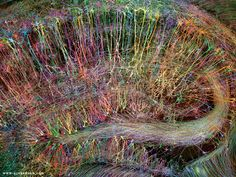 Brainbow Hippocampus in Color – Sold Out | Greg Dunn Design