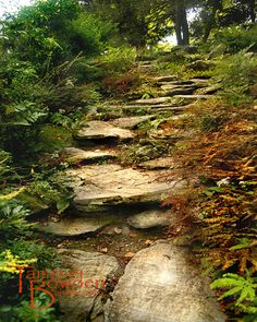 """Forest steps"" original photograph by Tammie Bowden"
