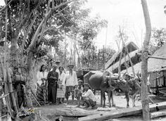Europeaan poseert met lokale bevolking naast een ossenkar op een boerenerf in Blambangan, Oost-Java. 1910-1930