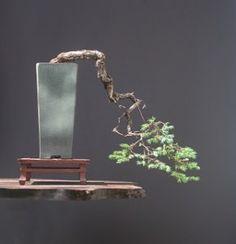 Aprende que macetas para bonsai debes elegir en función de sus características técnicas y estéticas. Guía práctica para la elección de macetas para bonsai.