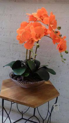 Indoor Flowers, Exotic Flowers, Amazing Flowers, Beautiful Flowers, Orchid Flower Arrangements, Orchid Centerpieces, Orchids Garden, Orchid Plants, Dendrobium Orchids