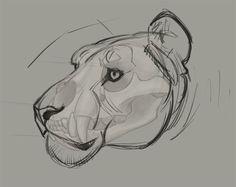 AnatoRef | Drawing Big Cats