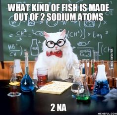 Funny pictures about Chemistry Cat Pun. Oh, and cool pics about Chemistry Cat Pun. Also, Chemistry Cat Pun photos. Chemistry Cat, Chemistry Classroom, Chemistry Teacher, Organic Chemistry, Chemistry Degree, Teacher Jokes, Chemistry Pick Up Lines, Nerdy Pick Up Lines, Chemistry Revision