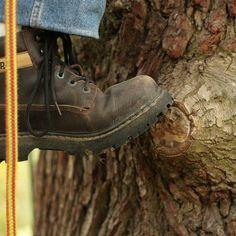 GRIMPER AUX ARBRES #treeclimbing #grimperdanslesarbres #grimpedarbre #tree #forests #woods #arbres