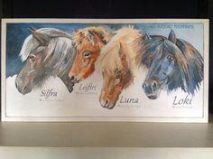 Opdracht - IJslandse paarden / John