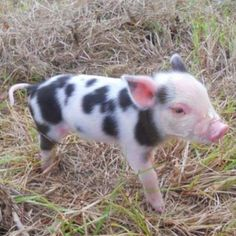 One day, oh one day!! I love you little piggy pie!!