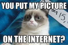 That face again!!!  You put my picture on the internet?  ~Grumpy Cat (not happy about this)