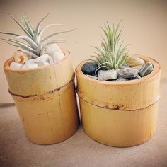 Nessuna descrizione della foto disponibile. Bamboo Hedge, Bamboo Planter, Wooden Planters, Diy Planters, Planter Pots, Best Office Plants, Bamboo House Design, Wood Table Design, Flower Pot Design