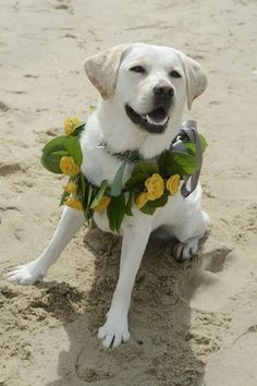 How to include your dog in your wedding day idea - yellow lab wearing a floral wreath with yellow flowers for its walk down the aisle {Dana Siles Photography}