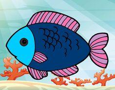 Resultado de imagem para peixes de aquario