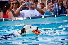 PRO PLAN Dog Diving am Wiener Hundetag | Fotograf: Photographer: Ludwig Schedl | Credit:EXOTICA Veranstaltungen | Mehr Informationen und Bilddownload in voller Auflsung: http://www.ots.at/presseaussendung/OBS_20130731_OBS0004