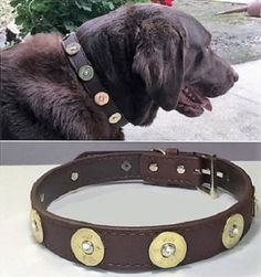 Available in burgundy/brown in 5 different sizes. Fancy Dog Collars, Dog Collars & Leashes, Leather Dog Collars, Collar And Leash, Best Christmas Gifts, New Puppy, Unisex, Shotgun, Dog Training