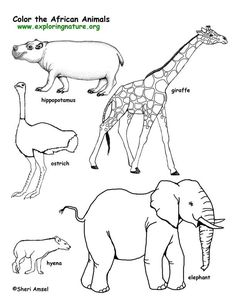 0a7bfc4a c29d06cb7169e animal coloring pages free coloring pages