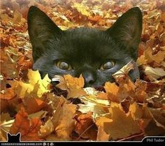 Hiding in a pile of leaves