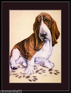 Vintage-English-Print-Bassett-Hound-Dog-Art-Picture
